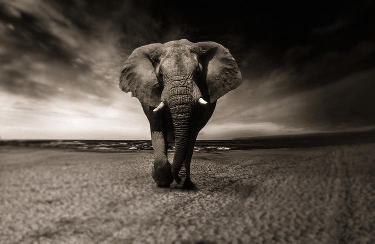 Умер слон, из-за которого Брижит Бардо едва не попросила гражданство РФ