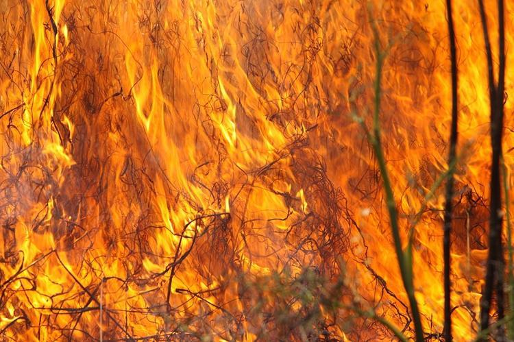 Чрезвычайная пожароопасность пятого класса объявлена в Ставропольском крае