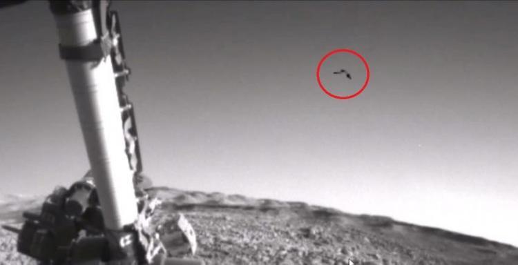 Уфологи обнаружили пролетевшую над поверхностью Марса ... птицу