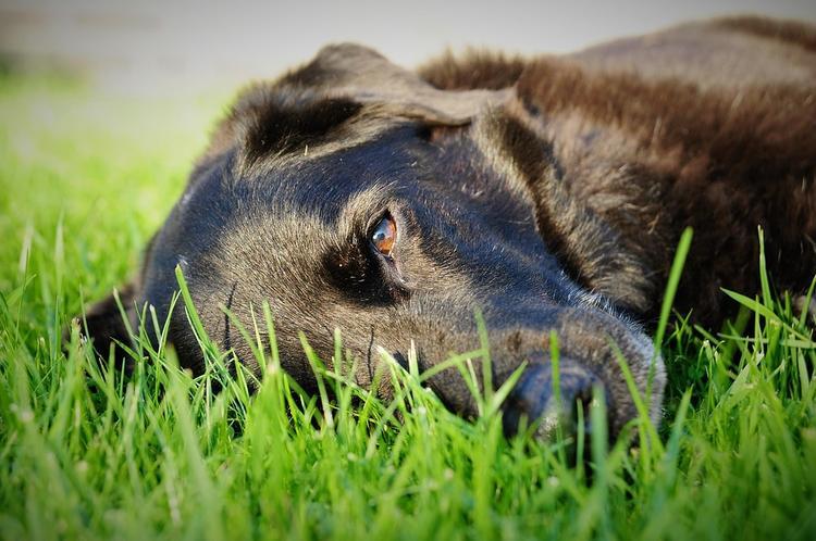 Американские ученые доказали феномен собачьей ревности