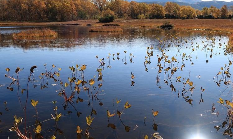 В болотистой местности в Коми затонул вездеход, семь человек пропали