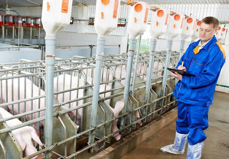 Разводить свинство можно будет только по-крупному