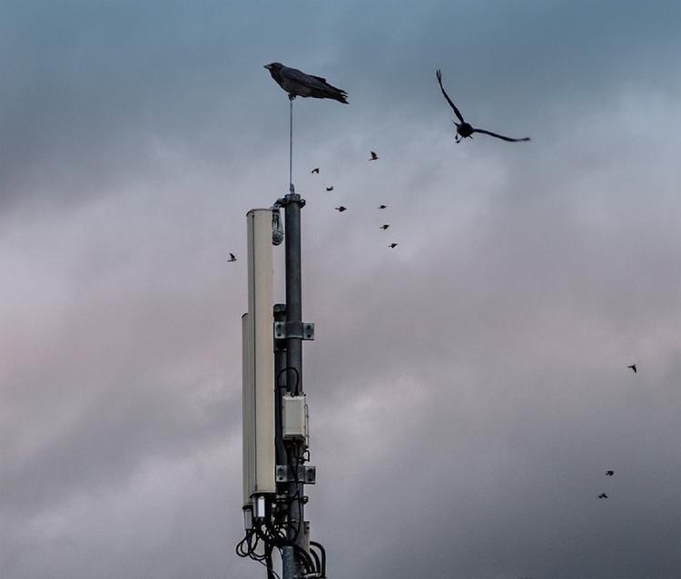 Сирийские военные сообщили об уничтожении израильского беспилотника