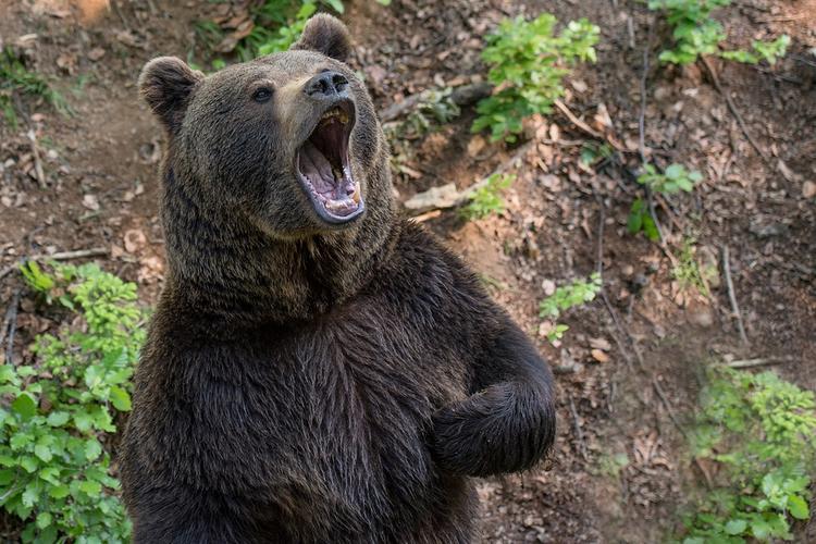 Медведь пришел во двор отдохнуть в гамаке и попал на видео