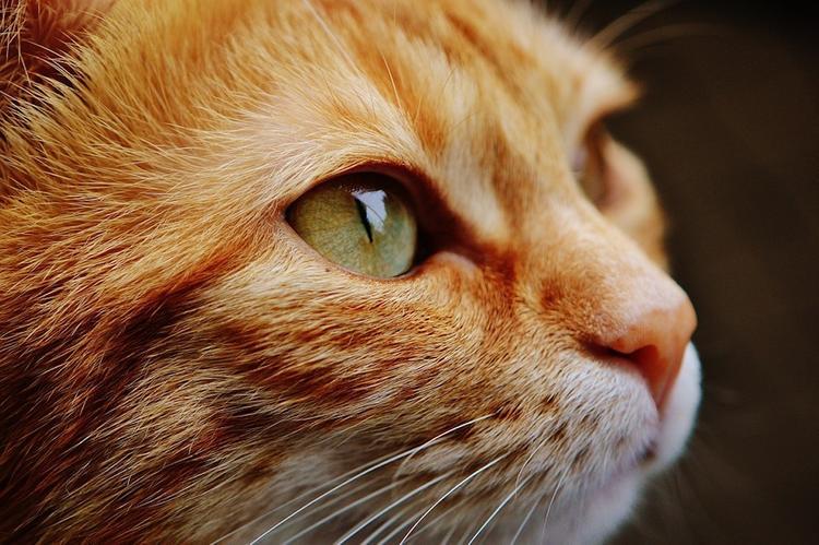 В одной из деревень Новой Зеландии хотят запретить кошек