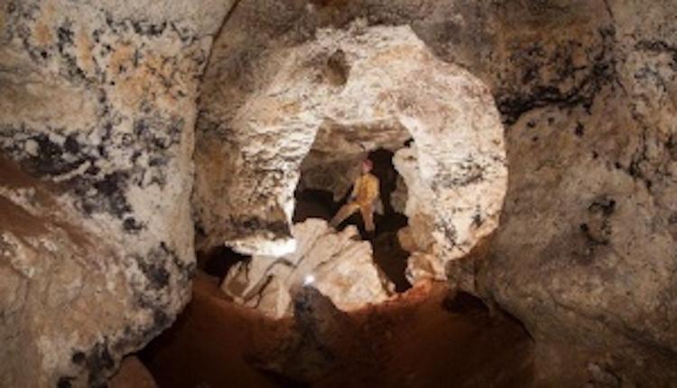 В карстовой пещере в Крыму нашли останки  древних жирафа, дикобраза и слона