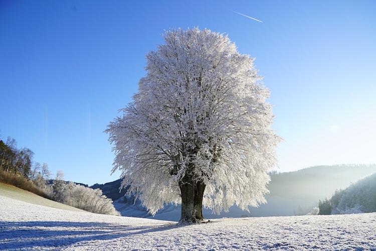 Синоптики сообщили, когда в Москве выпадет первый снег