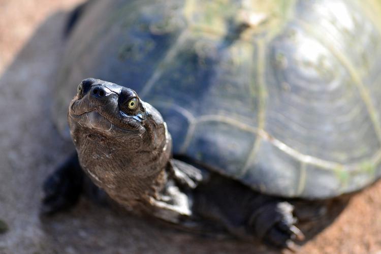 Почему черепахи живут так долго?