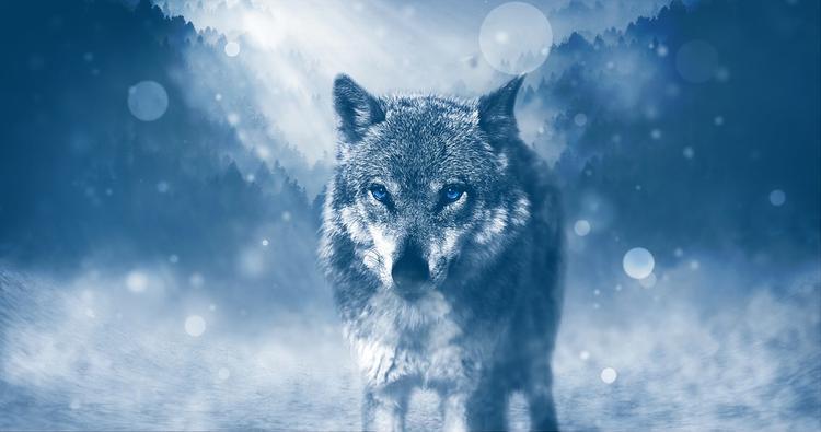 """В Челябинске волк напал на ребенка, хозяин хищника сказал: """"Зоотерапия"""""""