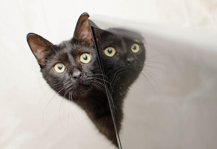 Пользователи Сети ломают голову над новой оптической иллюзией с котом