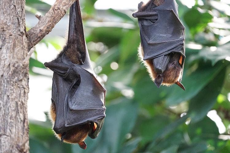 В Уфе спасают от голодной смерти летучего мышонка