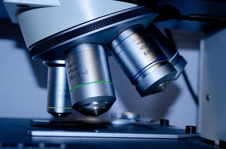 Ученые нашли в человеческом теле неизвестный тип кровеносных сосудов