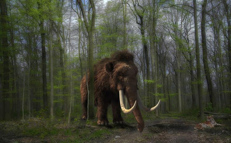 Учёные начали воскрешать мамонтов