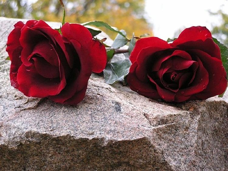 Юлия Началова будет покоиться на Троекуровском кладбище