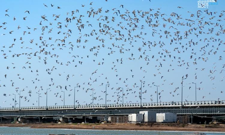 Искусственные гнездовья для птиц установили в районе Крымского моста
