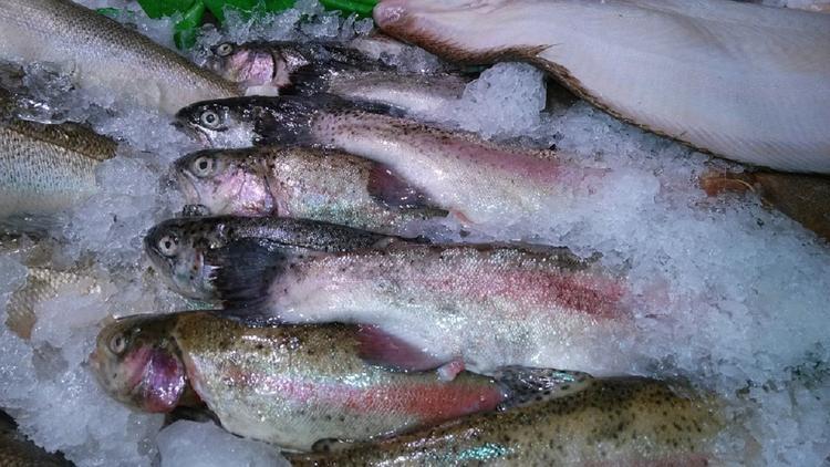 Пять с половиной тонн красной рыбы украли в Красногорске