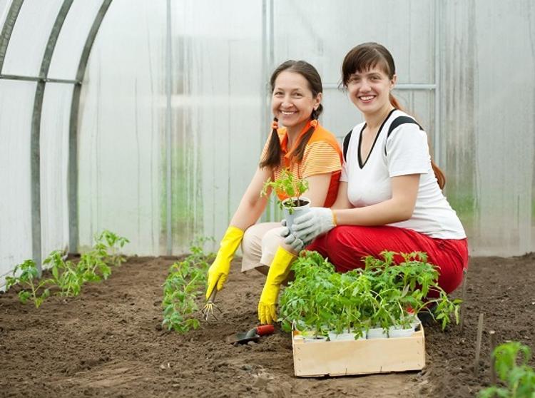 Для сахалинских садоводов и огородников наступает горячая пора