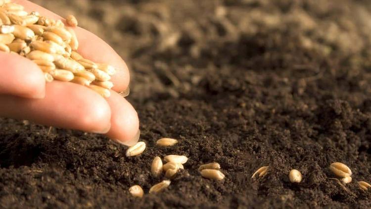 В Хабаровском крае поддержат элитное семеноводство на 6,2 млрд рублей