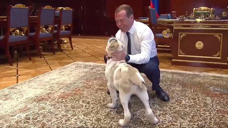 Медведев назвал подаренного ему бойцового пса, как героя культового мультика