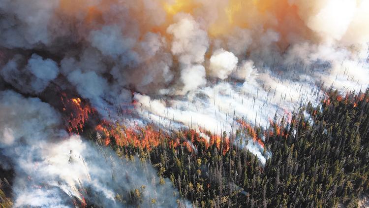 Кто палит сибирский лес?
