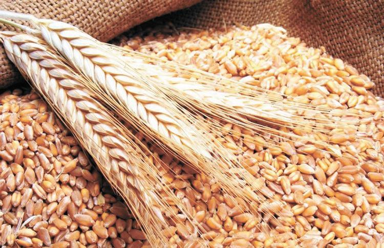 Россия борется забразильский рынок зерна