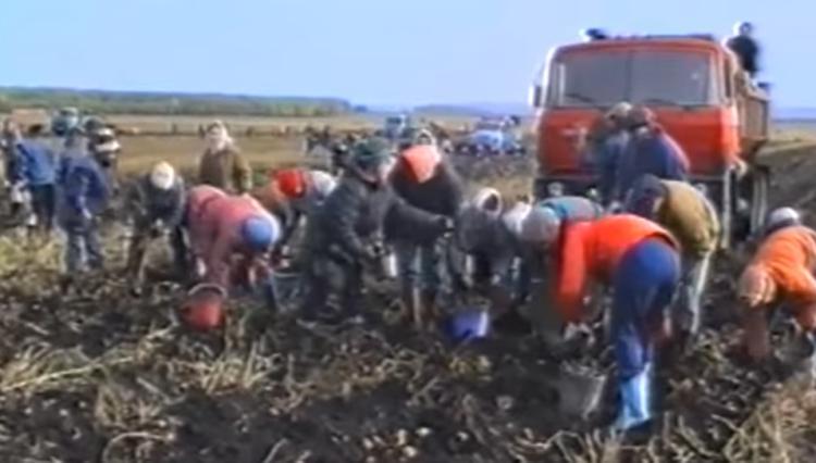 В Татарстане фермеры предложили нуждающимся собрать картошку себе