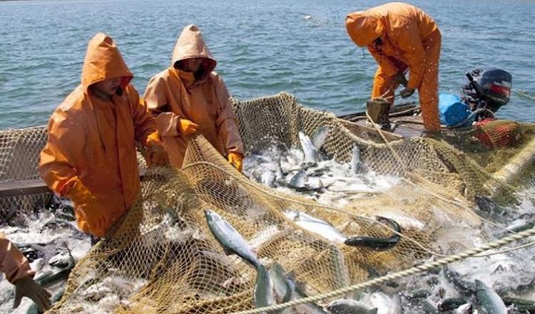 В Хабаровском крае активизировались черные рыболовы