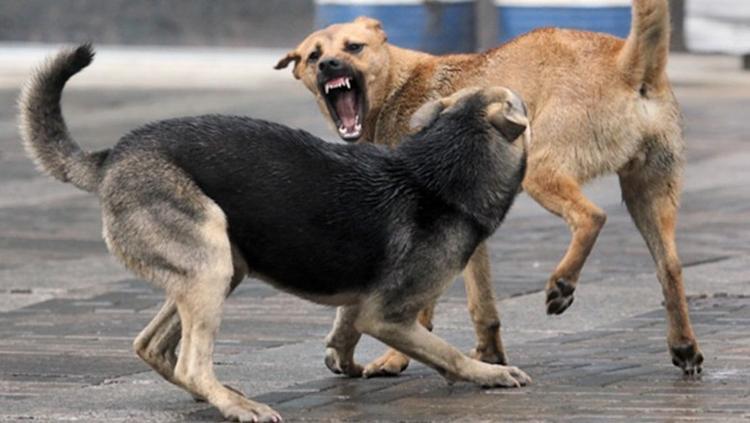 Прокуратура проверяет мэрию Хабаровска из-за бродячих собак