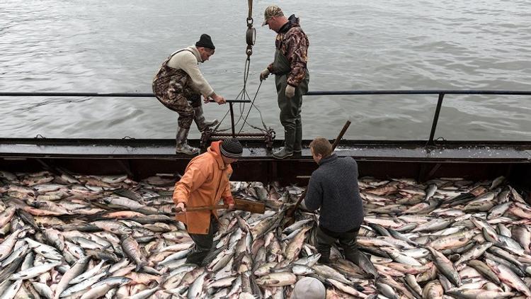 Законодательство в сфере рыболовства не устраивает сахалинцев