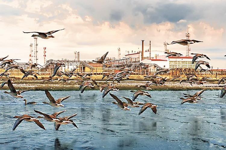 Эксперты и биржи высоко оценили устойчивость развития «Роснефти»
