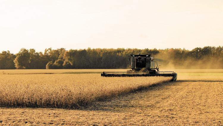Урожай зерна снова вырастет