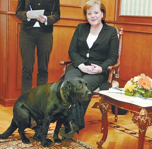 Der Spiegel считает главной причиной недопонимания Ангелы Меркель с Владимиром Путиным лабрадора президента России