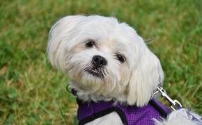 Ветеринары назвали ключевые правила ухода за домашними животными в жару