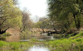Под Костромой в реке нашли тело пропавшего восьмилетнего мальчика