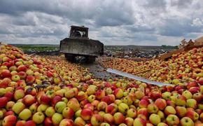 Москва побеждает впятилетней яблочной войне