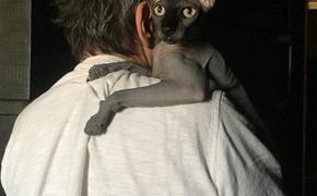 """""""Он раскаялся и извинился"""", обманувший семью Бари Алибасова мошенник вернул 500 тысяч за аферу с котом"""