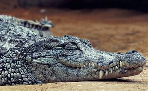 В Крыму в одном из дворов  Симферополя найдены останки крокодилов