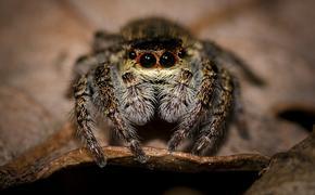 В Минздраве  опровергли данные о пострадавших в Подмосковье  от укусов ядовитых пауков