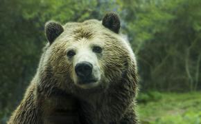 На пьяного жителя Омска напал медведь