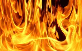 На западе Москвы произошел крупный природный пожар