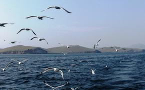 Эксперт заявил о токсичности воды в Байкале