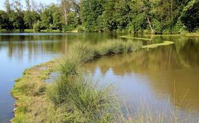 Из пруда в Подольске выловили тело пропавшего три дня назад подростка