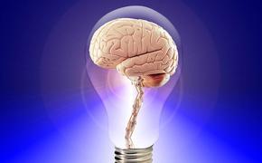 Ученые рассказали, как уберечь мозг от возрастных разрушений