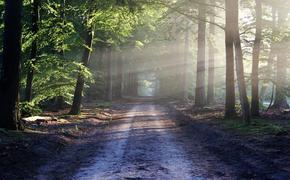 В подмосковном лесу обнаружены останки младенца