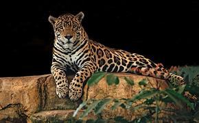 Ягуар вырвался из вольера в красноярском зоопарке