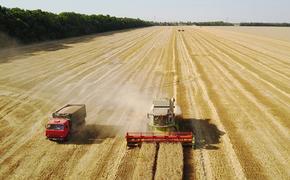 Рекордный урожай зерна собрали в Краснодарском крае