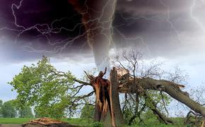 Как получить компенсацию с коммунальщиков за упавшее на автомобиль  дерево
