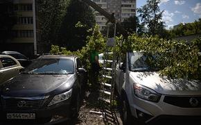 В Москве дерево упало в районе улицы Мантулинская и повредило несколько автомобилей