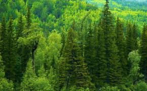 Ежегодно 7,5 млрд рублей за проданный иркутский лес не доходили до бюджета