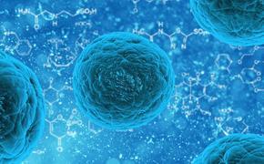 Учёные открыли новое средство для лечения рака